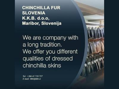 CHINCHILLA DRESSED SKINS